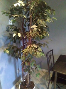 6 ft faux plant incl. delivery Kitchener / Waterloo Kitchener Area image 1