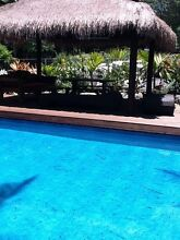 Thaching - Bali - Balinese Labrador Gold Coast City Preview