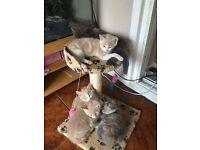 Four gorgeous kittens