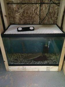 20 gal aquarium