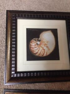 Set of 4 sea shell artwork framed- price reduced! Kitchener / Waterloo Kitchener Area image 3