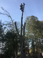 Tree Care And Removal Service