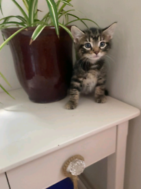 PENDING COLLECTION 8week old beautiful boy