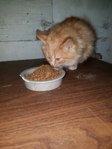 Need a forever home. FREE