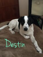 Destin is availabe for adoption through Liferaft Animal Rescue