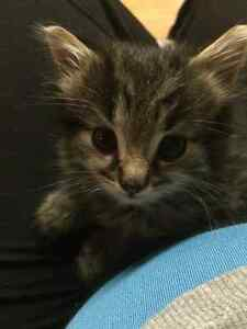 Kitten ready for a good home