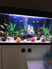 Aquarium/ Fish Tank For Sale