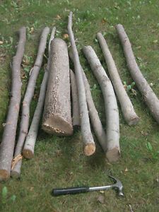 Basswood logs for carving, turning