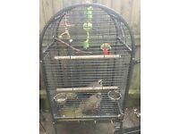 Pair of partridges With free cage