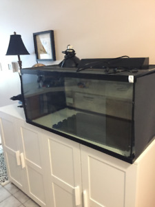 terrarium/vivarium/lizard tank/aquarium/bearded dragon