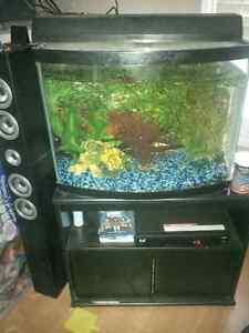 35 gallon bow front fish tank