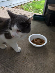Cat found near lake Banook