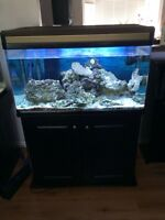 For sale 65 gallon Saltwater tank