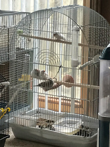 Baby Finches for cheap