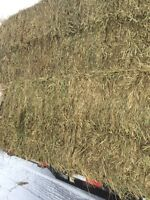 First cut hay in small and big squares