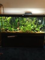 55 gallon live planted tank with fish and loads of accessories