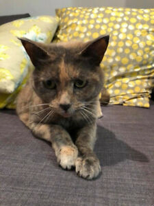 Kid-free home needed for 10 year old female cat.