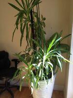 HOUSE  PLANT  ASSORTMENT