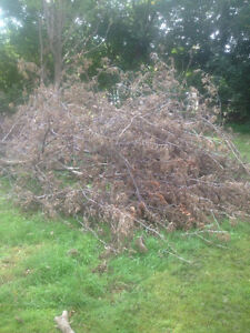 Tons of clean and free firewood for pickup London Ontario image 2