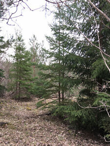 High and Dry Treed Lot for sale