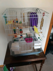 2 budgie birds, cage and accessories
