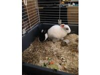 2 lovely rabbits, cage and accessories for sale