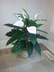 ARTIFICIAL HOUSE PLANTS-NO MORE WATERING