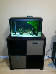 15 Gallon Aquarium, Live Fish, Live Plants, Stand and Accesories London Ontario image 2