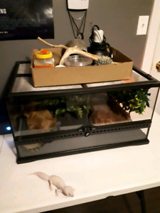 Blizzard leopard gecko and supplies