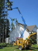 Tree Removal.. Is Cheaper Before The Tree Falls!  Save $$$ Now!