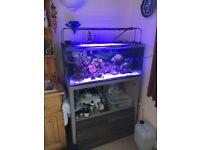 Fluvel m90 reef fish tank with maxspect razor led + extras