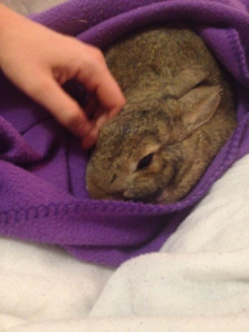 5 year old rescue rabbit, free to a good home