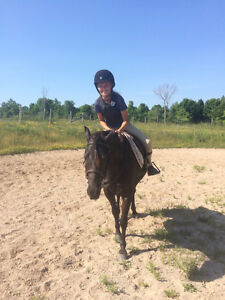 Summer Riding Day Camp assistant instructor/counsellor - 4 weeks