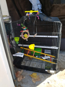Bird cage with accessories