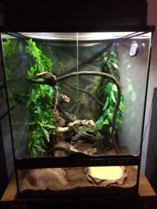 Gecko male mature a vendre avec terrariums toute equiper ..