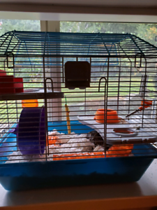 2 dwarf hamsters with cage, accessories, and food. 25.00
