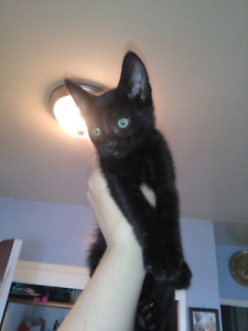 2 Kittens for rehome