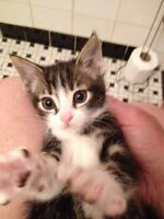 Two kittens 9 weeks old to good homes