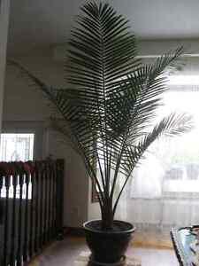 House Plants, starting from $10 Kitchener / Waterloo Kitchener Area image 2