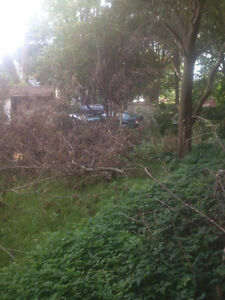Tons of clean and free firewood for pickup London Ontario image 4