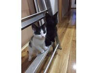 Two female kitten for sale