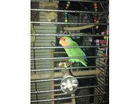 Lovely little love bird !!