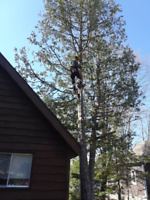 Reliable Professional Utility Arborist and Lawn Maintenance
