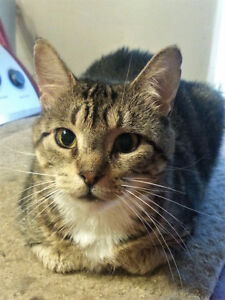"Female ""Tabby"" needs loving home and spay."