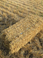 Wheat Square Straw Bales