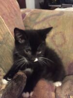 Kittens to give away to loving home.