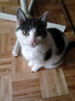 Female cat in need of a new home