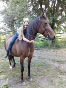 Quiet Trail Horse for Lease in North Gower