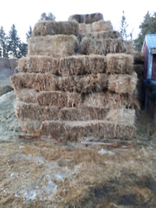 Wheat Bales for sale  $4 a bale