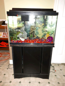 Fish tank + stand and accessories. 300 OBO